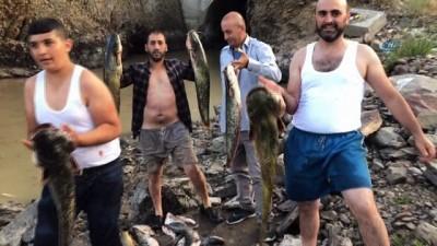 Baraj önünde sıkışan balıklar havasızlıktan telef oluyor Video