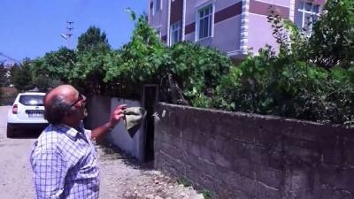 Evlerini çatıdaki leylek ailesiyle paylaşıyorlar - SAMSUN
