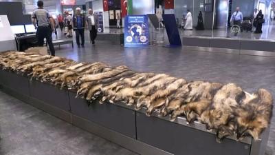 Havalimanında 'tilki kürkü' ele geçirildi - İSTANBUL