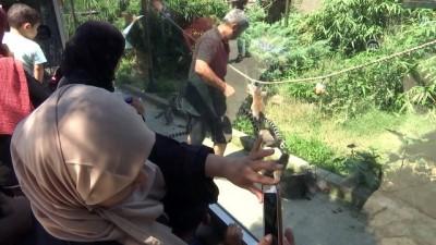 Dişi tamarine yurt dışından eş bulundu - İSTANBUL