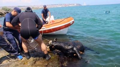 cankurtaran -  Gemiden denize düşen angusu kurtarma operasyonu