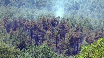 yangina mudahale - Orman yangını - DENİZLİ