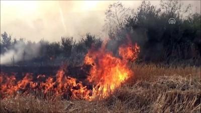 trol - Silivri'de anız yangını - İSTANBUL