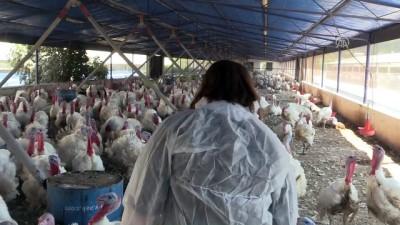Kocasından devraldığı hindi çiftliğini üç kat büyüttü - İZMİR Haberi