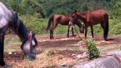 Beykoz'daki atlar tahliye edilecek - İSTANBUL