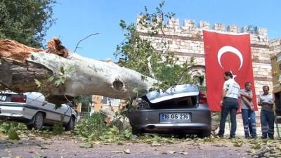 Devrilen 190 yaşındaki çınar lüks otomobili hurdaya çevirdi