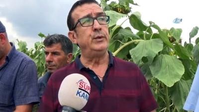 İnegöllü çiftçi Çin çekirdeğine tepkili