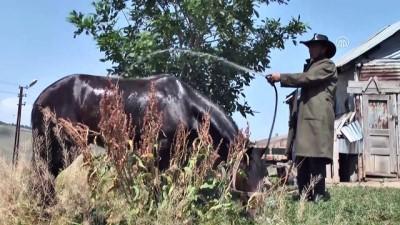 Sıcaktan bunalan atlarını yıkayarak serinletiyorlar - KARS