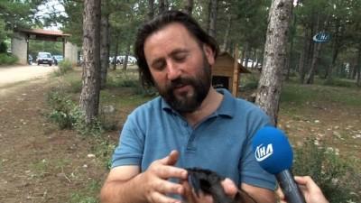 Gizemini koruyan Ebabil kuşu Karabük'ü yurt edindi