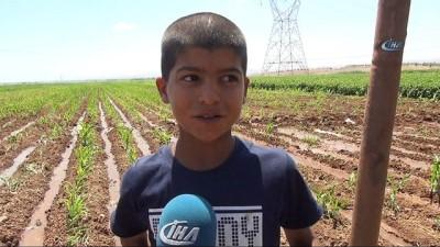 misir tarlasi -  Henüz 10 yaşında 3 yıldır tarla suluyor