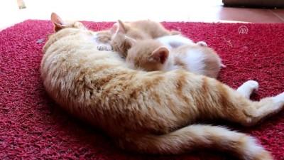 Sokak kedisi ve yavrularının yeni evi sağlık merkezi oldu - BOLU