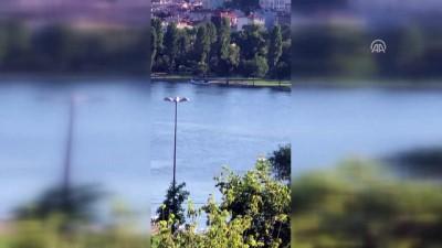 Haliç'in sevimli misafirleri yunuslar - İSTANBUL