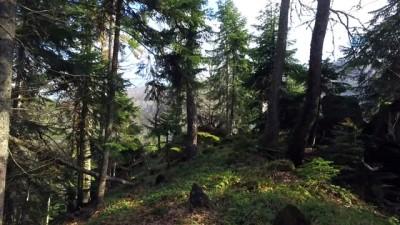 Batı Karadeniz'in gizli kalmış cenneti, ekoturizmin yeni merkezi Yenice ormanları