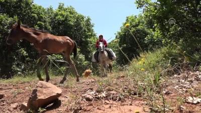 Berivanların at sırtında zorlu yolculuğu - MUŞ