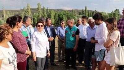 Türkiye'nin en büyük lavanta tarlasında hasat başladı - BURDUR