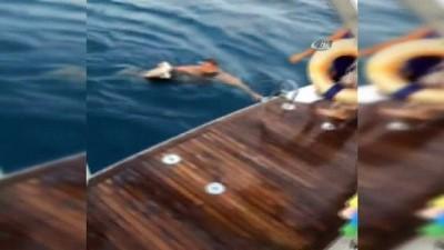 amator -  Denizde oltaya takılıp can çekişen martı kaptan tarafından kurtarıldı
