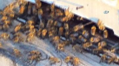 Şanlıurfa'da milyonlarca arı öldü
