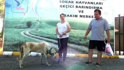 kopek - Tabancayla yaralanan köpek tedavi altına alındı - ANTALYA