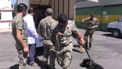 kopek - Sınırda görevli mayın arama köpeklerine bakım - MALATYA