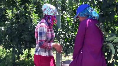 tarim iscisi - Tarımda 'ekmek kapısı' köy - BİLECİK