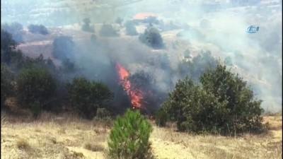 Selendi'de orman yangını
