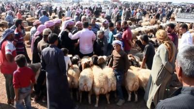 Fırat Kalkanı bölgesinde Kurban Bayramı hareketliliği - AZEZ