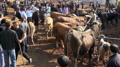 Hayvan pazarlarının 'tosunları' alıcılarını bekliyor - KARS