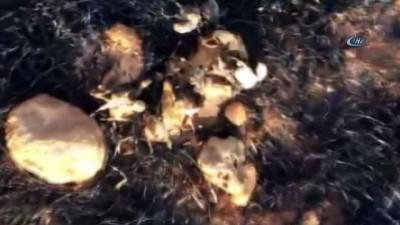 Keklikler dakikalar içerisinde küle döndü