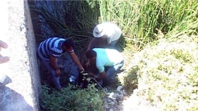 su kanali - Su kanalına düşen ineği itfaiye kurtardı - TOKAT
