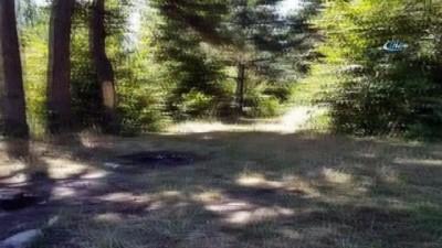 ogretmen -  Ağaçları çıra için katlettiler