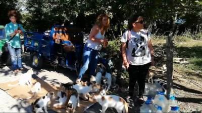 bisiklet -  Hayvanların Nino'su...Ormanlık alanda 70 kedi, 18 köpekle birlikte yaşıyor