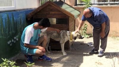 İşkence gören köpek engellilerin 'Dost'u oldu - VAN