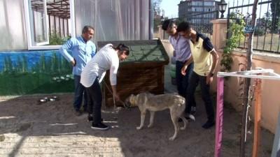 Ölüme terk edilen köpek, engellilerin 'Dostu' oldu
