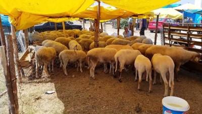 Hayvan pazarında yoğunluk - UŞAK
