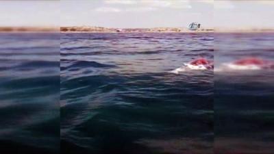 2 metre boyunda, 350 kiloluk yunus balığını ateş edip öldürdüler