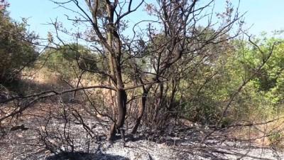 Orman yangını kontrol altına alındı - BURSA