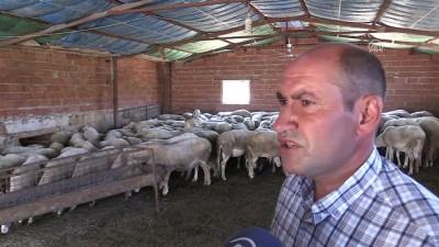 Et açığı tescilli Eşme koyunuyla azaltılacak - UŞAK