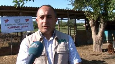 - İHH Azerbaycan'da Kurban Kesimi Yaptı