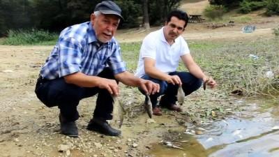 Kütahya'da esrarengiz balık ölümleri