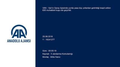 Kaçakçılık operasyonu - VAN