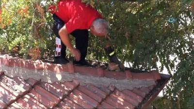Çatıda mahsur kalan kedi için itfaiye ekipleri seferber oldu