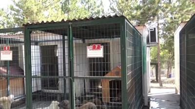 Sokak hayvanlarına klimalı barınak - ÇORUM