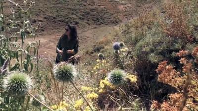 Bitki florası ve arıcılık için dağ bayır geziyor - BİNGÖL
