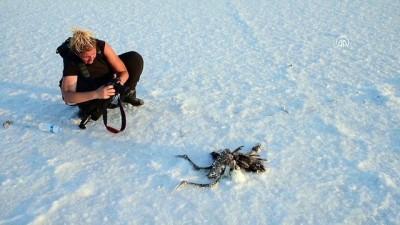 Tuz Gölü'nde yavru flamingo ölümleri - AKSARAY