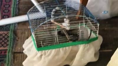 Eve giren yılan kafesteki kuşu yedi