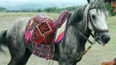 4. Düziçi Belediyesi Rahvan At Yarışları - OSMANİYE