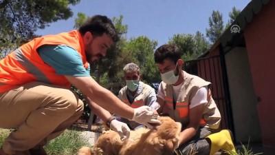 Sokak köpeği 'Moniş' şefkat eliyle hayata tutundu - ŞANLIURFA