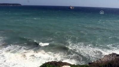 Kıyıköy açıklarında ölü iki yunus bulundu - KIRKLARELİ