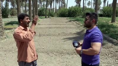 Kuraklık 'iki nehir ülkesi' Irak'ta tarımı bitirmek üzere - BAĞDAT