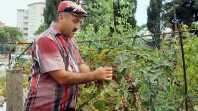 organik tarim -  Muhtardan örnek bahçe